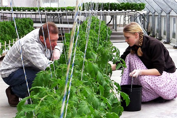 a father and daughter working together in a greenhouse at the Platte Clove Bruderhof