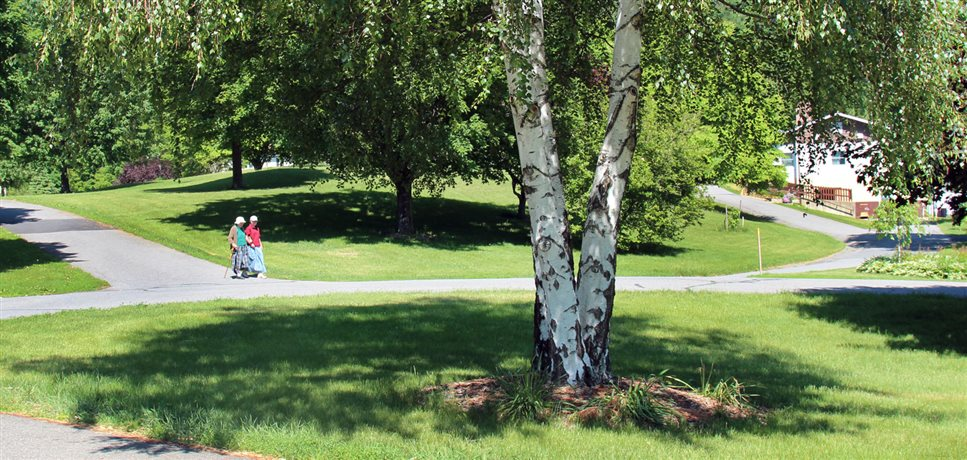 An image of two women walking arm in arm down a small hill and past a birch tree