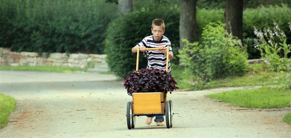 An image of a school boy pushing some plants in a pushcart