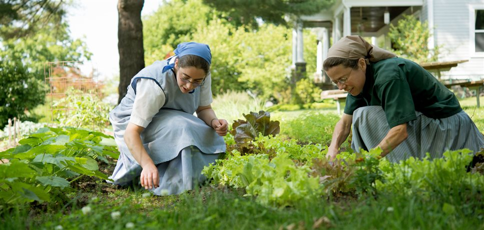 An image of two young women picking lettuce in their vegetable garden