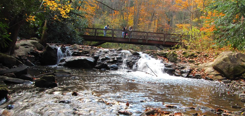 An image of a bridge crossing a stream in the woods at the Spring Valley Bruderhof