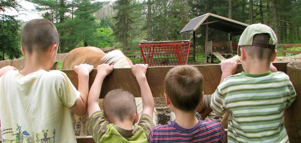 An image of four young boys looking over a pasture fence at a horse