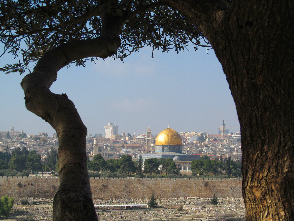 a view of Jerusalem through an olive grove on the outskirts