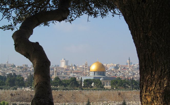 a view of Jerusalem through an olive grove