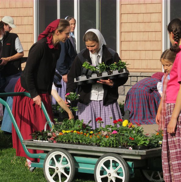 Community members selecting flowers for their flower gardens