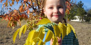 a young girl holding out a branch of brightly-colored fall leaves